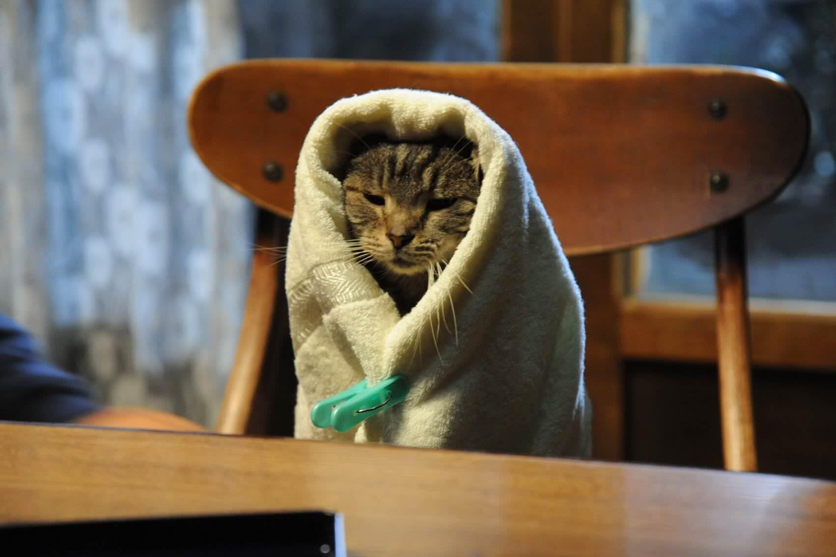 專題┃影評┃如果這世界貓消失了,清新日本電影藏世界經典玄機